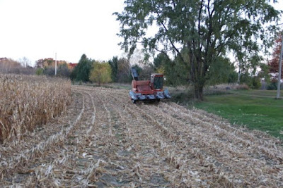 corn harvest: is this farm organic? probably not