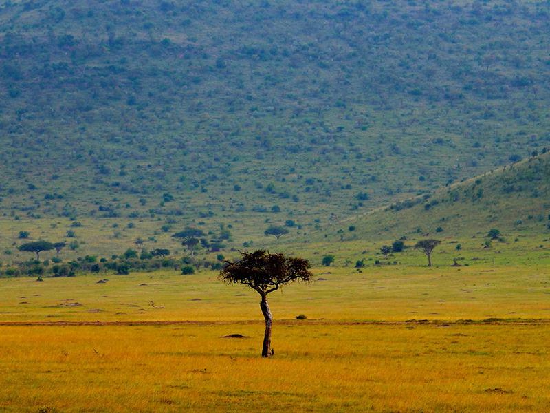 African Savanna Biome