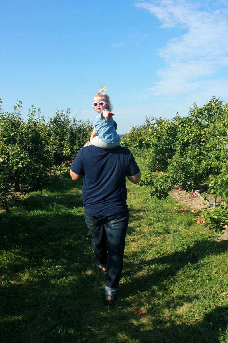 Apple Picking in the Greater Toronto Area