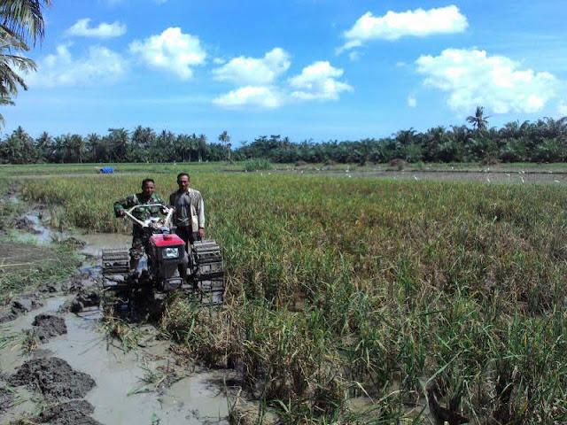 Pelda Suriadi Bersama Petani Menyiapkan Lahan Sawah di Desa Bangun Sari