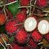 Τα 9 πιο ακριβά φρούτα στον κόσμο !