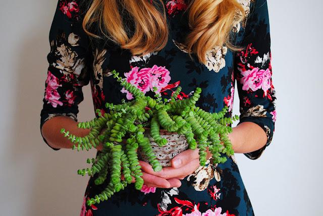 plant selfie crassula