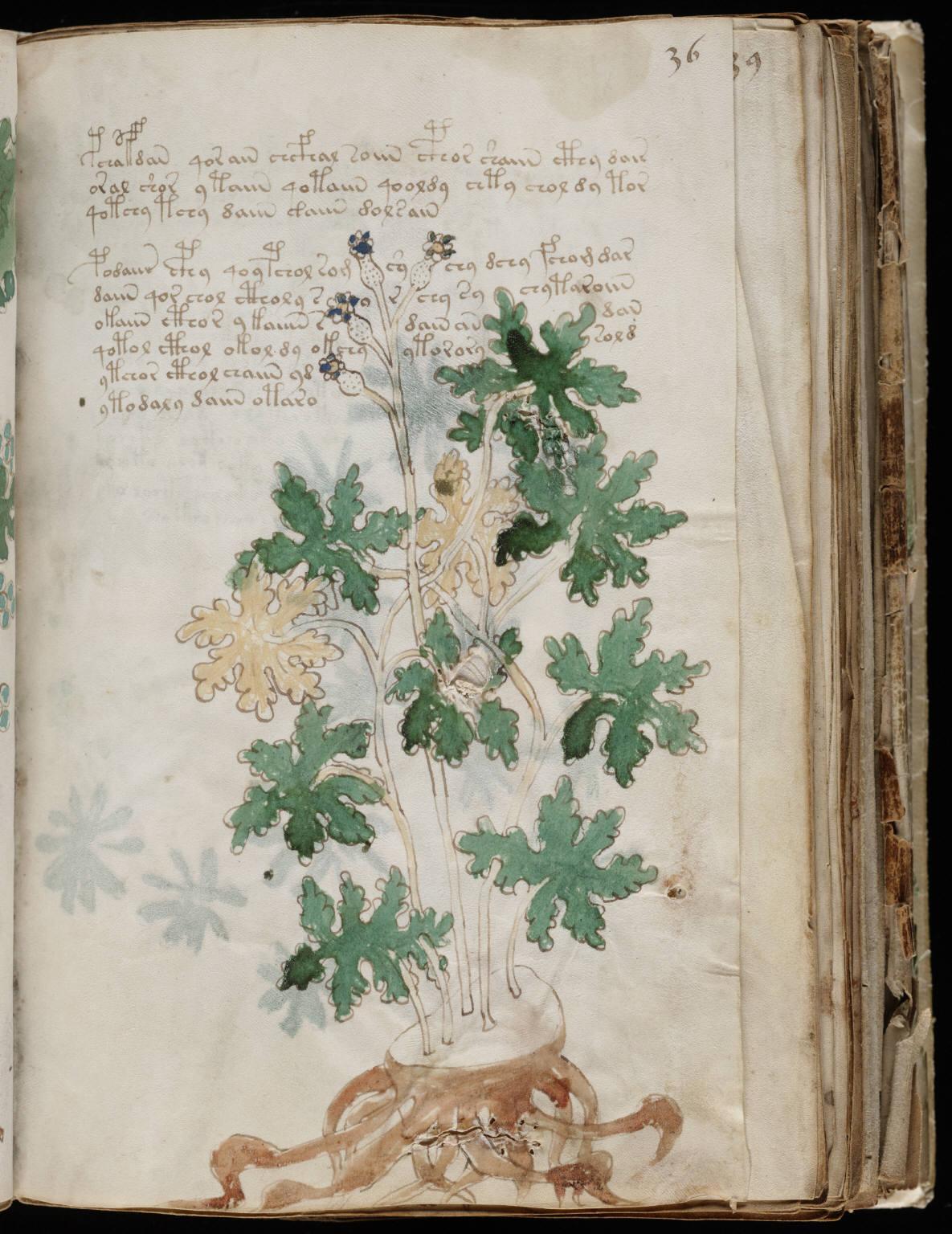 manuscrito069