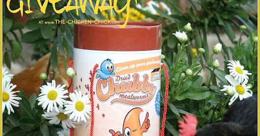 Chubby Mealworms GIVEAWAY at Clever Chicks Blog Hop #222!