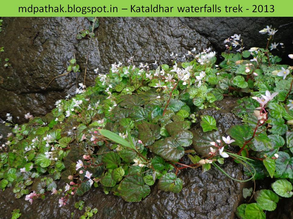 flowers blooming on the rocks during monsoon