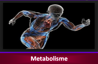 Apa itu Metabolisme