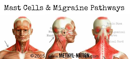 Mast Cells and Migraines