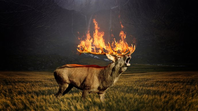 Hot Stag