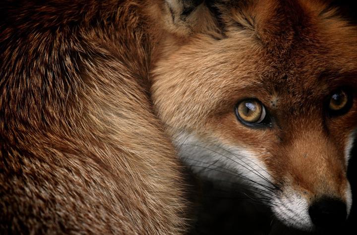 vahşi hayvan fotoğrafı