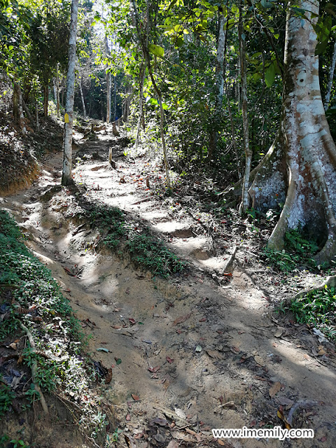 Hiking @ Bukit Putih (Ah Pek Hill Trail)