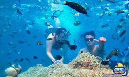 pesona bawah laut wisata pulau harapan
