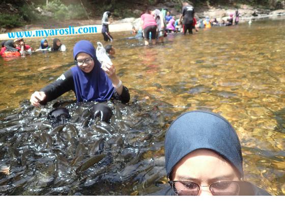 Ikan Kelah cari makan