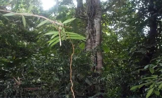 Ekosistem Hutan Hujan Tropis Dan Hutan Mangrove Beserta Fungsinya