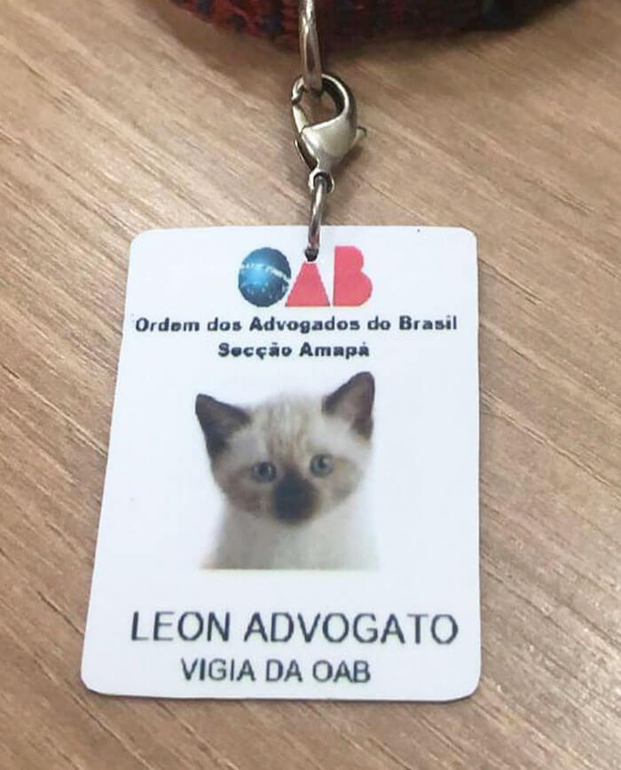 Stray Kitty Became A Law Firm's New Employee Shutting Down People Who Complained