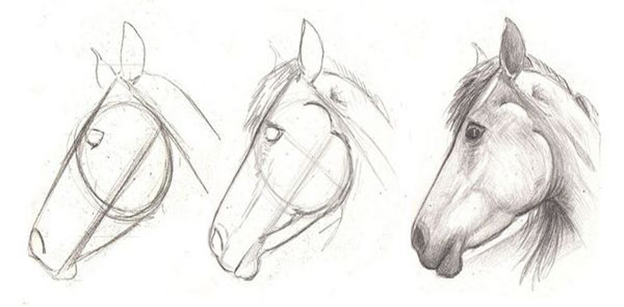 How to draw a horse head in 3 easy step