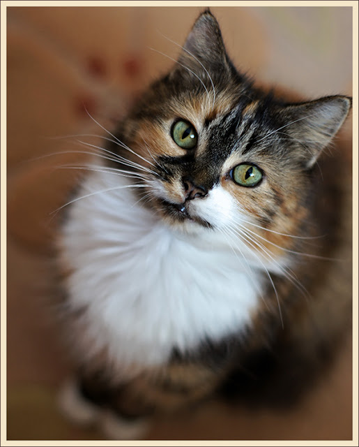 Cally, my little ray of sunshine on a rainy day by hehaden from flickr (CC-NC)
