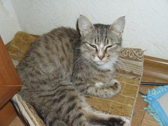 Кошка лежит фото