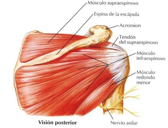 Las crónicas del pádel: Lesiones en el pádel. Parte 1: tendinitis ...