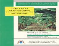 gran-enana-un-nuevo-cultivar-de-platanera-para-canarias
