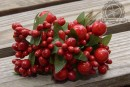 http://www.stonogi.pl/owoce-galazce-czerwone-wielkosci-j8834-p-14521.html
