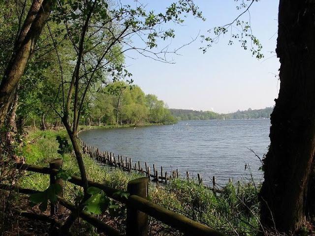 Floresta Grunewald em Berlim