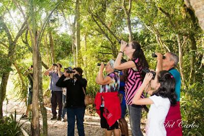 Lançados no feriado, passeios de observação de aves e às dunas do araçá receberam muitos elogios