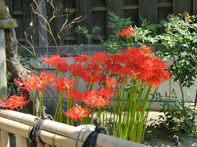 荏柄天神社のヒガンバナ