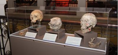 Antropologia y biologia