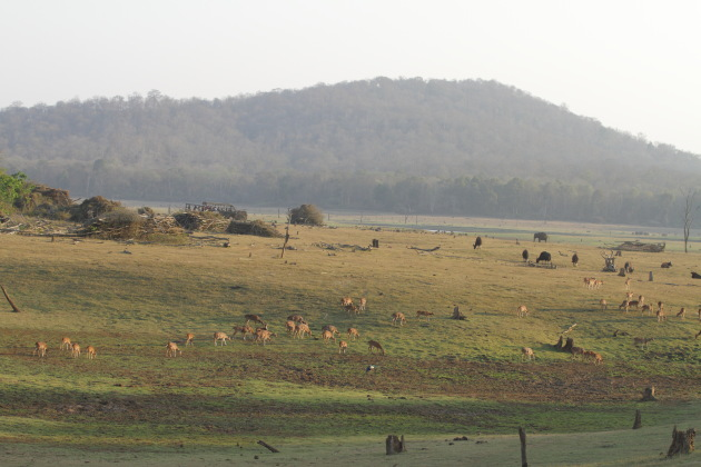 Spotted deer, peafowl, wild boar, gaur and elephant graze together at Kabini Tiger Reserve, India