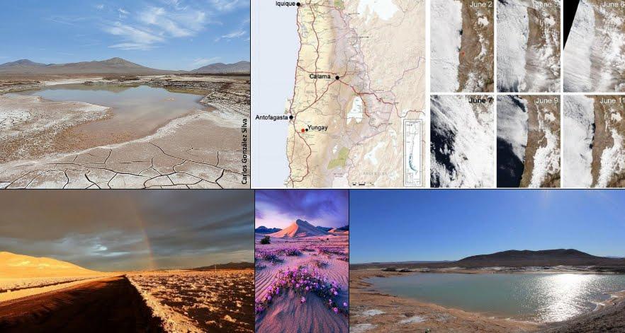 La prima pioggia nel Deserto di Atacama dopo 500 anni.