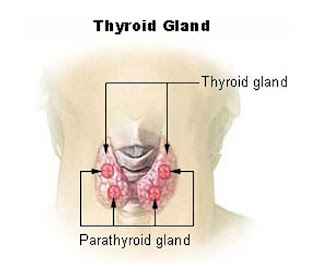 থাইরয়েডিনাম ও থাইরো আয়োডিনাম (Thyroidinum and Thyro Iodinum)