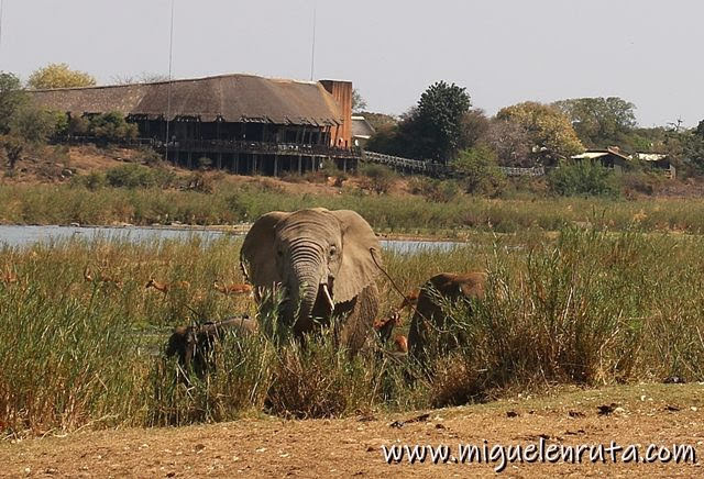 Campamento-Lower-Sabie-safari-Kruger