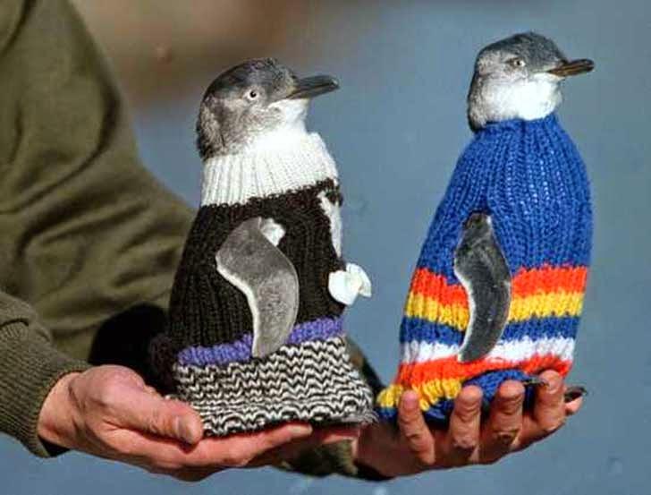 suéteres para pingüinos