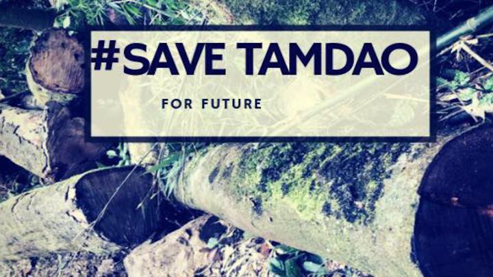 Đánh đổi rừng nguyên sinh Tam Đảo II vì lợi ích kinh tế - Từ góc nhìn báo chí trong và ngoài nước