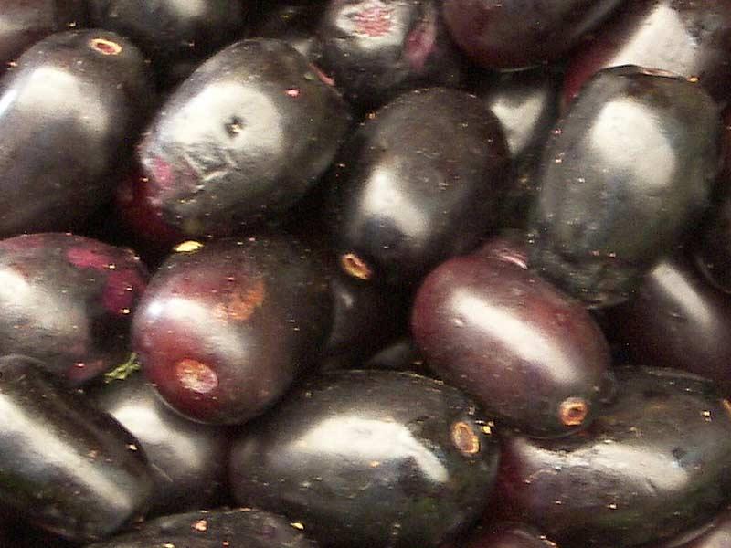 Jambul (Syzygium cumini) fruit pictures