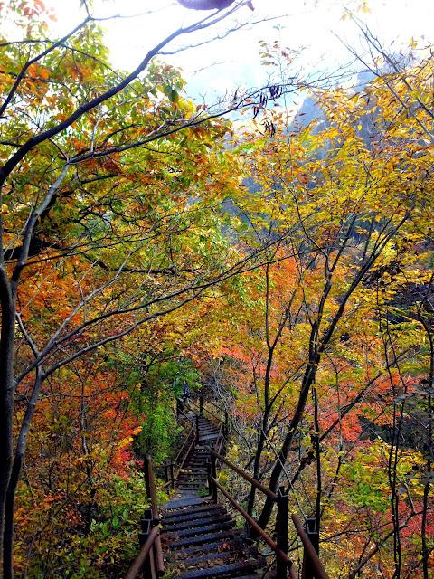 紅葉の森にかかる鉄の階段