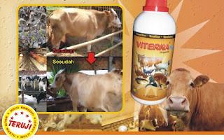 mempercepat penggemukan sapi potong, meningkatkan bobot pada sapi potong