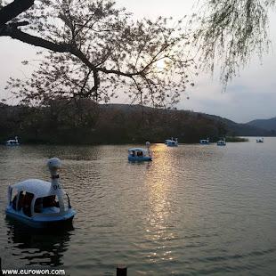 Patos navegando al atardecer en el lago de Gyeongju
