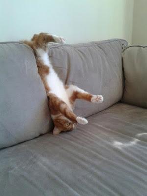 gatto in una posizione strana