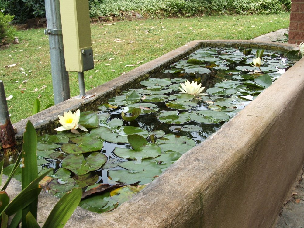 Il giardino delle naiadi giugno 2012 for Vasca per stagno