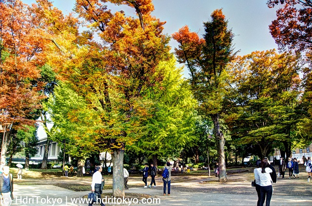 trees at Ueno park on Nov, 13, 2016. people view autumn leaves.