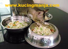 Home Made Cat Food Recipes