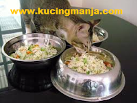 Cat Food Recipes. Qucik, Easy, Nutritious