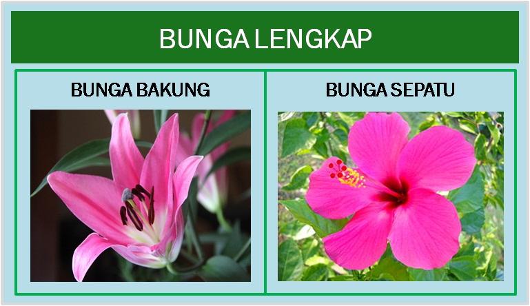 Struktur Bunga Jaini Loen