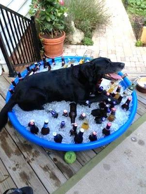 Kaltes Bier im Sommer - Pool, Eiswürfel, Bier Witziger schwarzer Hund