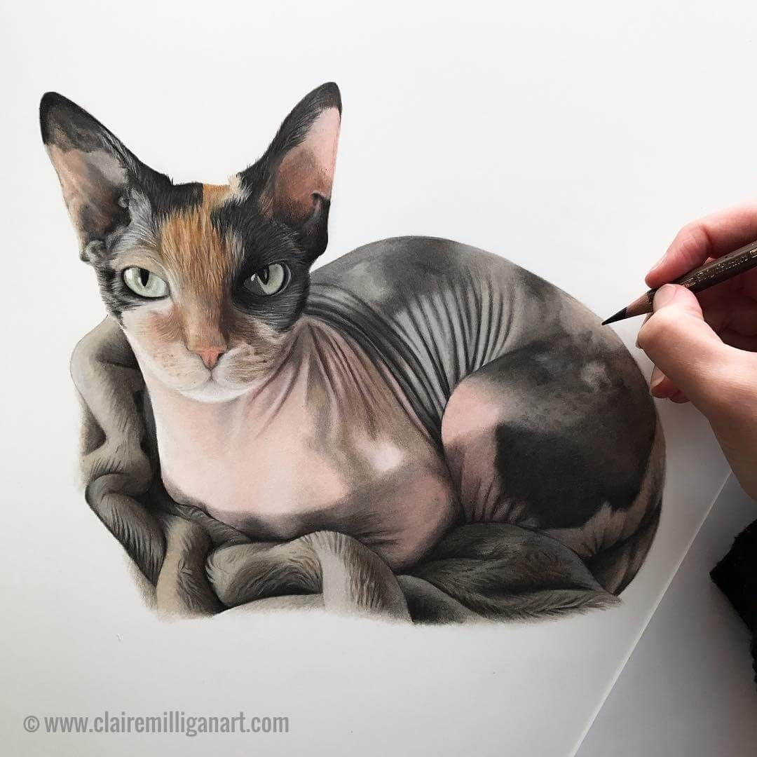 02-Harley-Quinn-Sphynx-Cat-Claire-Milligan-Realistic-Color-Pencil-Animal-Portraits-www-designstack-co