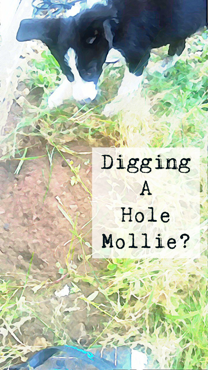 Mollie The Border Collie Blog: The Puppy Diary's
