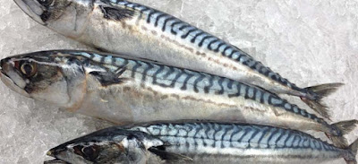 atlantic-mackerel-fish-with-omega-3-fatty-acids-list-picture