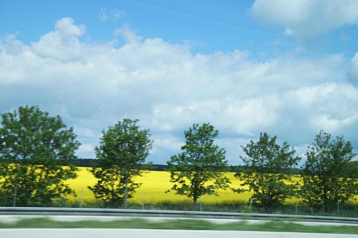 Blau-weißer Himmel über Rapsfeld | Tasteboykott Blog