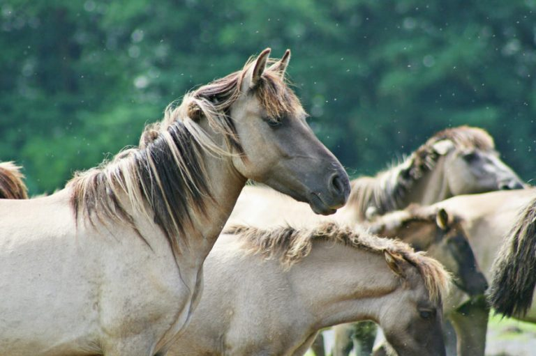 Federal Agency Votes To Slaughter 44,000 Of The 67,000 Wild Horses In The U.S.